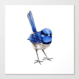 Splendid Fairy Wren, Blue on White Canvas Print