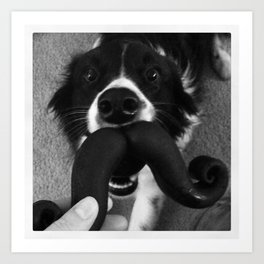 Border Collie Mustache Art Print
