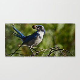 Mouth Full Canvas Print