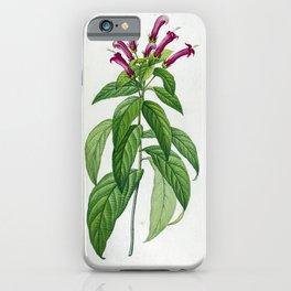lobelia surinamensis Redoute Roses 1 iPhone Case