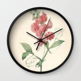lathyrus latifolius Redoute Roses 4 Wall Clock
