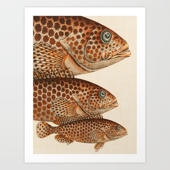 Fish Classic Designs 6 Art Print