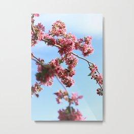 Pink Floral Branch (Color) Metal Print