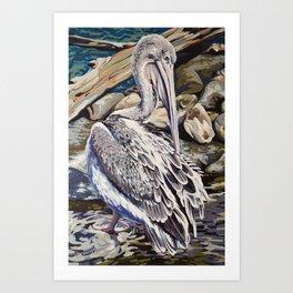 Pink-backed Pelican Art Print