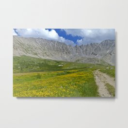 Mayflower Gulch brimming with wildflowers Metal Print