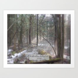 Still Woods Art Print