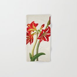 Vintage Botanical illustration, 1824 (Seedling Amaryllus) Hand & Bath Towel