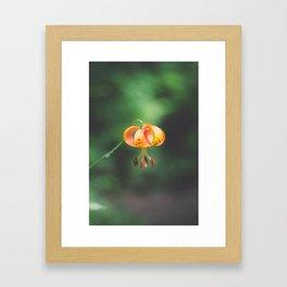 Dangling. Framed Art Print