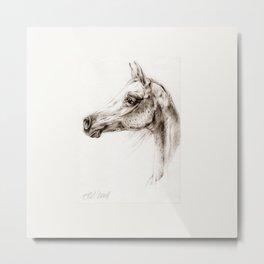 Arabian horse head pencil drawing Metal Print