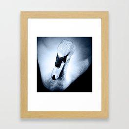 Swan 1 Framed Art Print