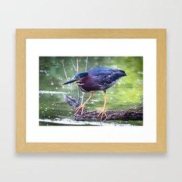 Green Heron Hunting Framed Art Print