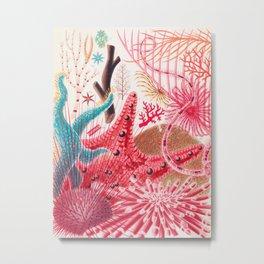 Colorful Starfish Urchin Vintage Sealife Illustration Metal Print