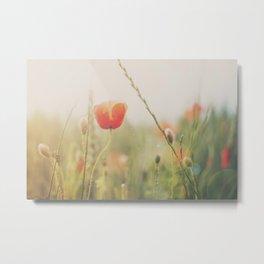 Poppy fields photograph Metal Print
