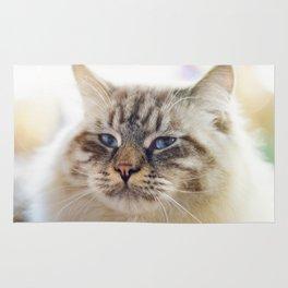 Close-up portrait of blue-eyed Ragamuffin cat Rug
