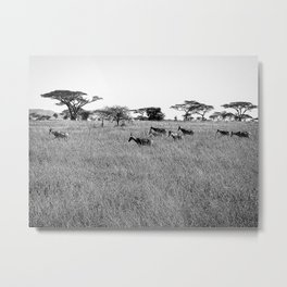 Impala in the grass Metal Print