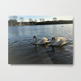 Irish Swans Metal Print