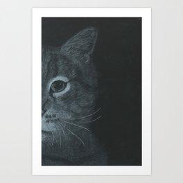 Cat Close Up Art Print