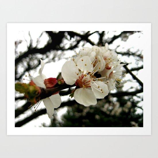 Viennese Blossoms Art Print