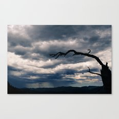Lonely Tree Landscape Canvas Print