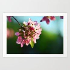 Pink Flowers Blue sky Art Print