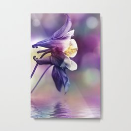 Columbine Flower 279 Metal Print