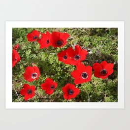 Wild Anemone Flowers In A Spring Field Art Print