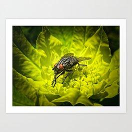 Macro Shot of a Summer Fly Sunbathing on a Yellow Perennial Garden Plant Art Print