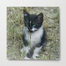 Feral Kitten With Blue-Seafoam Eyes Playing With Grass Metal Print