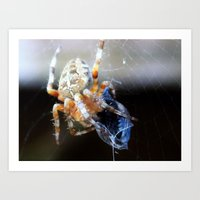 The Spider and the Fly Art Print