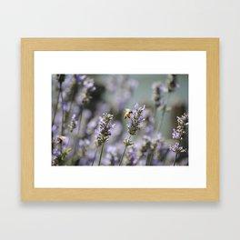 Buzzy Framed Art Print