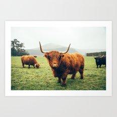Highland cattle Art Print