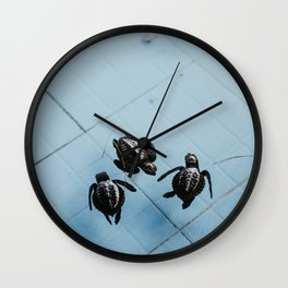 Baby sea turtles in on a island in Bali, Indonesia | Blue colored animal photography | Art print Wall Clock