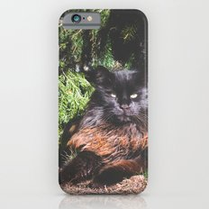 The king of the cats iPhone 6s Slim Case