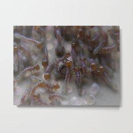 hatchlings Metal Print