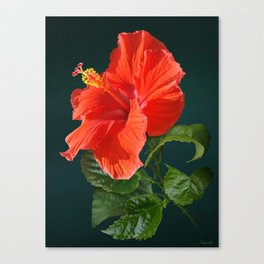 Red Darling Hibiscus Canvas Print