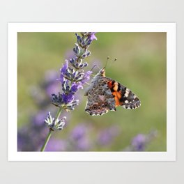 Painted Lady Buttefly On Lavender Art Print