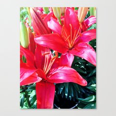 Red Tigers Canvas Print