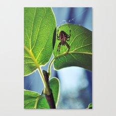 2009. Spider.  Canvas Print