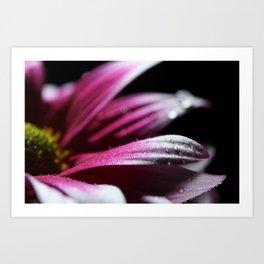Pink Daisy - Nature Art Print