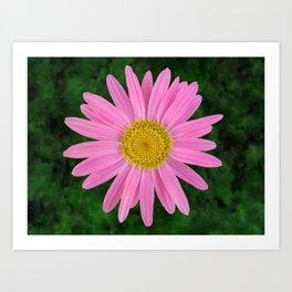 Pink Shasta Daisy Art Print