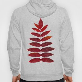 Red Sumac Leaves Hoody