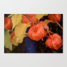 Autumn little jewels Canvas Print