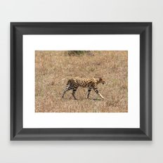 Serval Cat  Framed Art Print