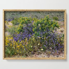 Painted Desert 7493 - Joshua_Tree_National_Park Serving Tray