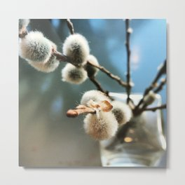 Pussy Willow Branches Metal Print