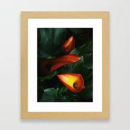 Calla Lily Trio Framed Art Print