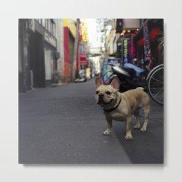 Osaka Bull dog Metal Print