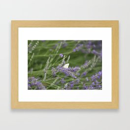Tranquil in Lavender Framed Art Print