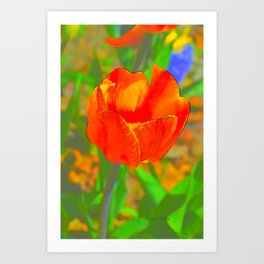 Etched Red Tulip Art Print