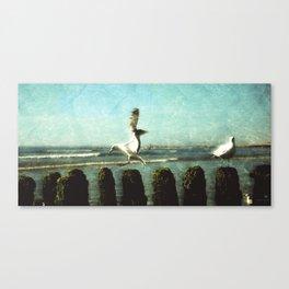 Seagulls on Sylt Canvas Print